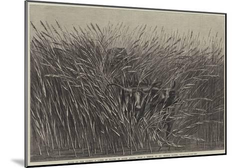 Grass of the Desert, a Scene of Travel in South Africa-Thomas Baines-Mounted Giclee Print