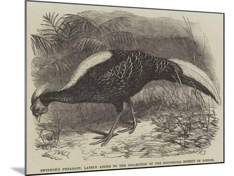 Swinhoe's Pheasant, Lately Added to the Collection of the Zoological Society of London-Thomas W. Wood-Mounted Giclee Print