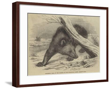 Circassian Bear, in the Gardens of the Zoological Society, Regent'S-Park-Thomas W. Wood-Framed Art Print