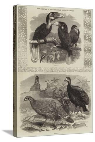 New Arrivals at the Zoological Society's Gardens-Thomas W. Wood-Stretched Canvas Print