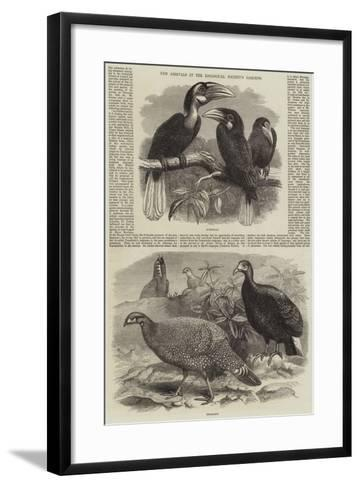 New Arrivals at the Zoological Society's Gardens-Thomas W. Wood-Framed Art Print