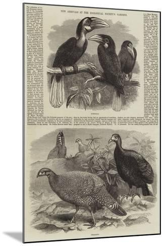 New Arrivals at the Zoological Society's Gardens-Thomas W. Wood-Mounted Giclee Print