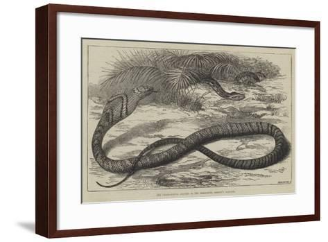 The Snake-Eating Serpent in the Zoological Society's Gardens-Thomas W. Wood-Framed Art Print