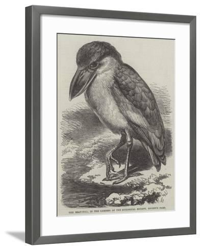 The Boat-Bill, in the Gardens of the Zoological Society, Regent's Park-Thomas W. Wood-Framed Art Print