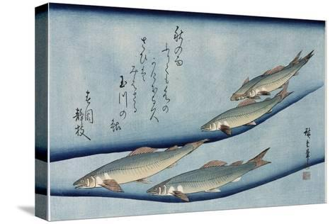 Rivertrout', from the Series 'Collection of Fish'-Utagawa Hiroshige-Stretched Canvas Print
