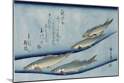 Rivertrout', from the Series 'Collection of Fish'-Utagawa Hiroshige-Mounted Giclee Print