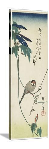 Java Sparrow and Morning Glories, 1834-1839-Utagawa Hiroshige-Stretched Canvas Print