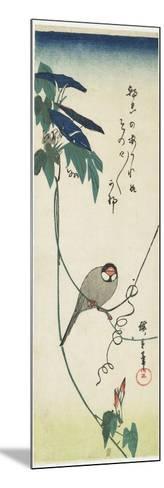Java Sparrow and Morning Glories, 1834-1839-Utagawa Hiroshige-Mounted Giclee Print