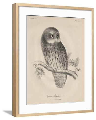 Syrnium Albogularis, 1850-William E. Hitchcock-Framed Art Print
