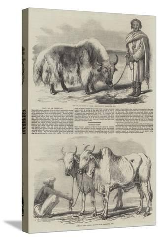 The Yak, or Thibet Ox-William Carpenter-Stretched Canvas Print