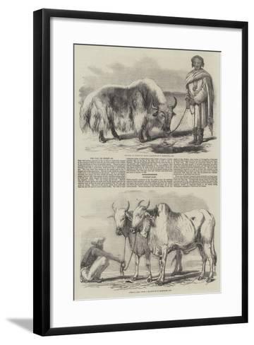 The Yak, or Thibet Ox-William Carpenter-Framed Art Print