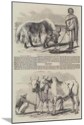 The Yak, or Thibet Ox-William Carpenter-Mounted Giclee Print