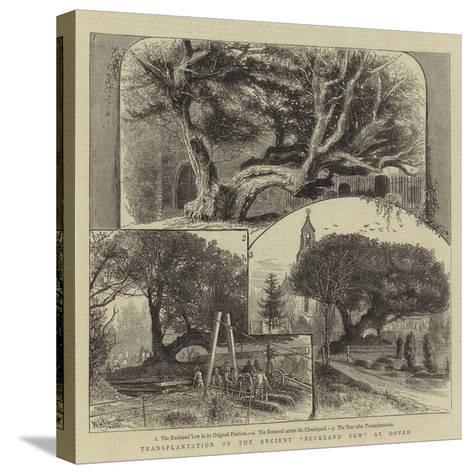 Transplantation of the Ancient Buckland Yew at Dover-William Henry James Boot-Stretched Canvas Print