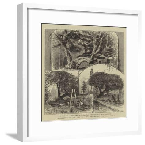 Transplantation of the Ancient Buckland Yew at Dover-William Henry James Boot-Framed Art Print
