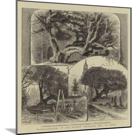Transplantation of the Ancient Buckland Yew at Dover-William Henry James Boot-Mounted Giclee Print