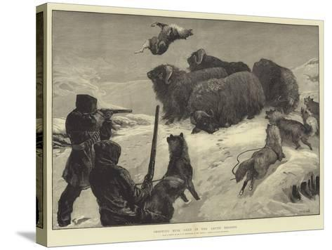 Shooting Musk Oxen in the Arctic Regions-William Heysham Overend-Stretched Canvas Print