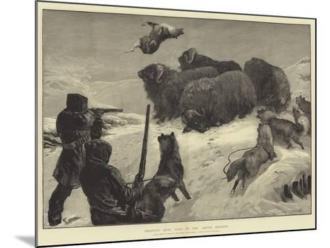 Shooting Musk Oxen in the Arctic Regions-William Heysham Overend-Mounted Giclee Print
