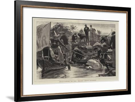 Swan-Upping on the Thames Above Windsor-William Small-Framed Art Print