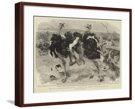 Life on a Californian Ostrich-Farm, a Fight in the Paddock Between Two Ostriches-William Small-Framed Art Print