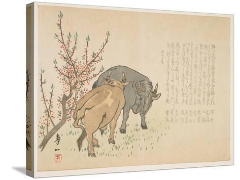 Oxen, January 1853-Yoshimura K?iitsu-Stretched Canvas Print