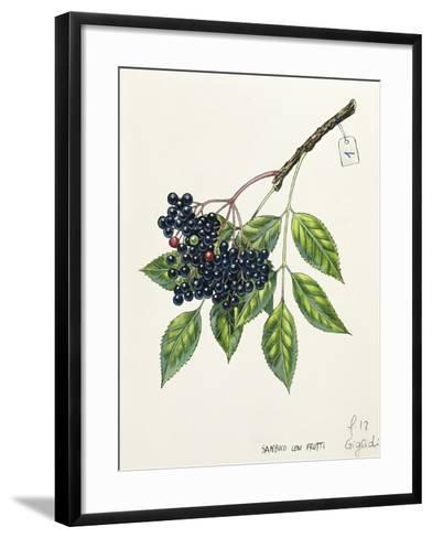 Adoxaceae--Framed Art Print