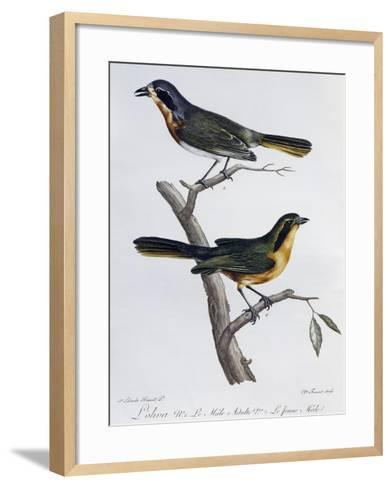 Adult Male and Young of Olive Bushshrike (Telophorus Olivaceus)--Framed Art Print