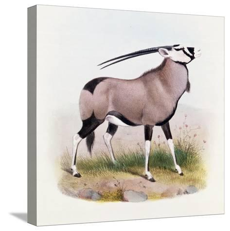 The Gemsbok, from 'The Book of Antelopes'-Wolf & Smit-Stretched Canvas Print