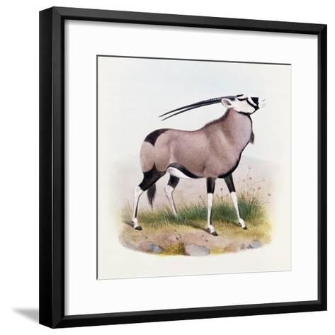 The Gemsbok, from 'The Book of Antelopes'-Wolf & Smit-Framed Art Print