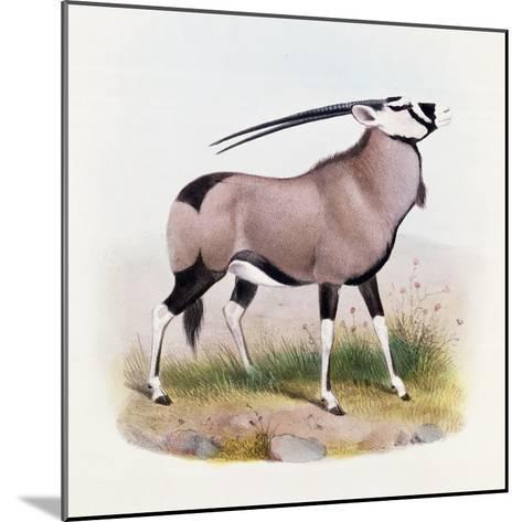 The Gemsbok, from 'The Book of Antelopes'-Wolf & Smit-Mounted Giclee Print