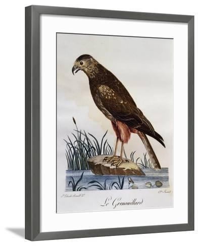 African Marsh Harrier (Circus Ranivorus)--Framed Art Print