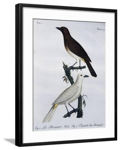 African Red-Eyed Bulbul (Pycnonotus Nigricans)--Framed Art Print