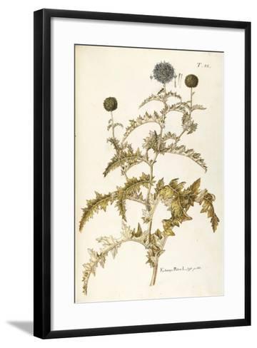 Asteraceae or Compositae--Framed Art Print