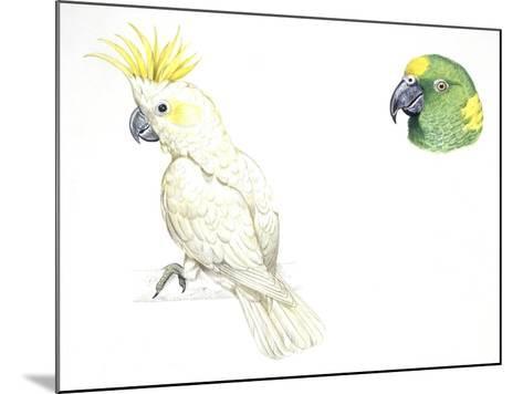 Birds: Psittaciformes--Mounted Giclee Print