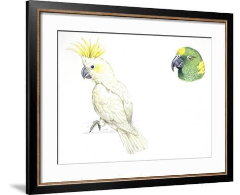 Birds: Psittaciformes--Framed Art Print