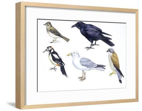 Birds: Skylark (Passeriformes--Framed Art Print