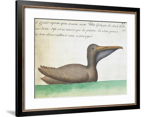 Brown Pelican (Pelecanus Occidentalis)--Framed Art Print