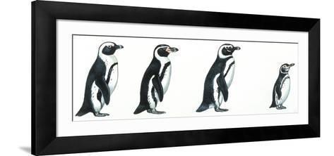 Birds: Sphenisciformes--Framed Art Print