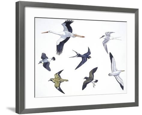 Birds: White Stork (Ciconiiformes--Framed Art Print