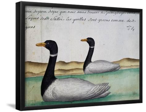 Canada Geese--Framed Art Print
