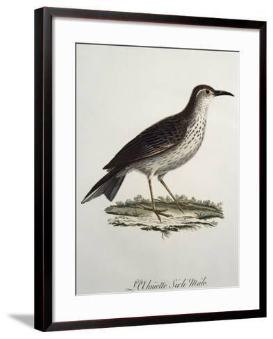 Cape Longbill Male (Certhilauda Curvirostris)--Framed Art Print