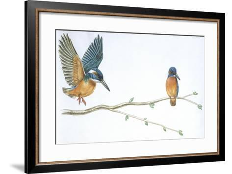 Birds: Coraciiformes--Framed Art Print