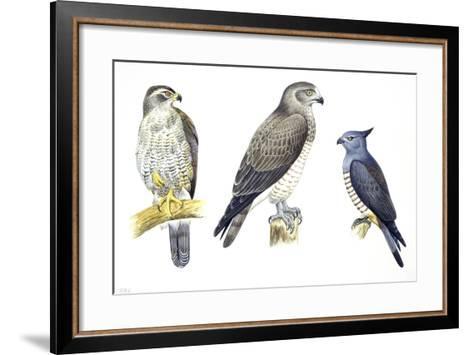 Birds: Falconiformes--Framed Art Print
