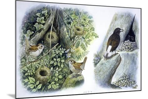 Birds: Passeriformes--Mounted Giclee Print