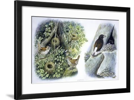 Birds: Passeriformes--Framed Art Print