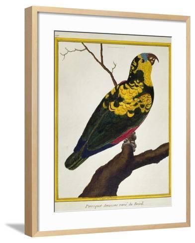 Blue-Fronted Parrot (Amazona Aestiva)--Framed Art Print