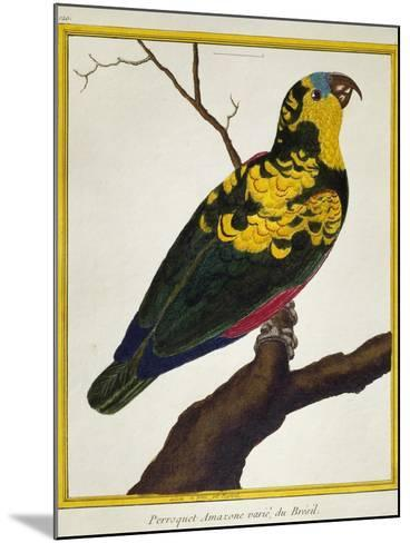 Blue-Fronted Parrot (Amazona Aestiva)--Mounted Giclee Print