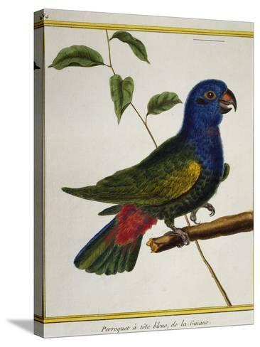 Blue-Headed Parrot (Pionus Menstruus)--Stretched Canvas Print