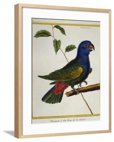 Blue-Headed Parrot (Pionus Menstruus)--Framed Art Print