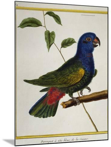Blue-Headed Parrot (Pionus Menstruus)--Mounted Giclee Print