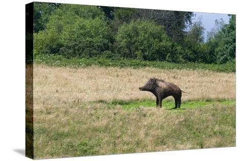 Boar/Hog Willow Sculpture in Meadow--Stretched Canvas Print